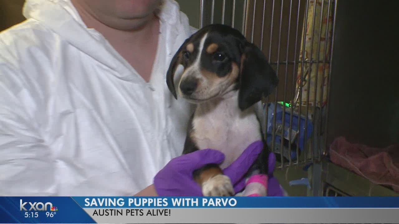 Puppies Survive Thanks To Austin Pets Alive Special Icu Youtube