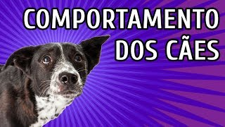 PROBLEMAS DE COMPORTAMENTO com Terapeuta de Cães | LIVE
