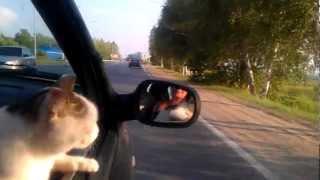 Кошка Зося очень любит смотреть в окно автомобиля. Zosia cat loves to look out the window of the car
