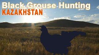 Hunting black grouse in Kazakhstan 2015