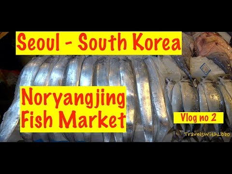 SEOUL - SOUTH KOREA - NORYANGJIN FISH MARKET - World's Second Largest?  Vlog no. 2