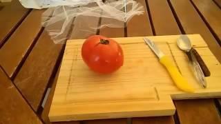 Συλλογή σπόρων παραδοσιακής ντομάτας