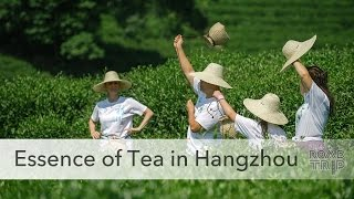 The Essence of Tea in Hangzhou, China
