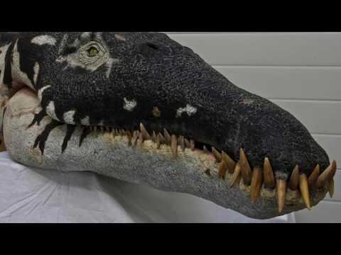 Paleo Log: Liopleurodon