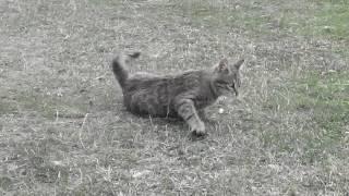Реакция котенка на пчелу.ПРИКОЛ!kitten.