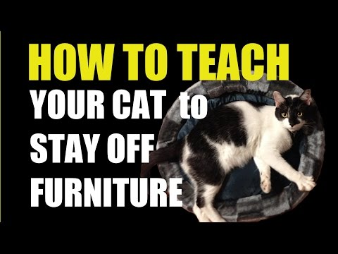 How To Get Your Cat To Stop Scratching The Furniture Doovi
