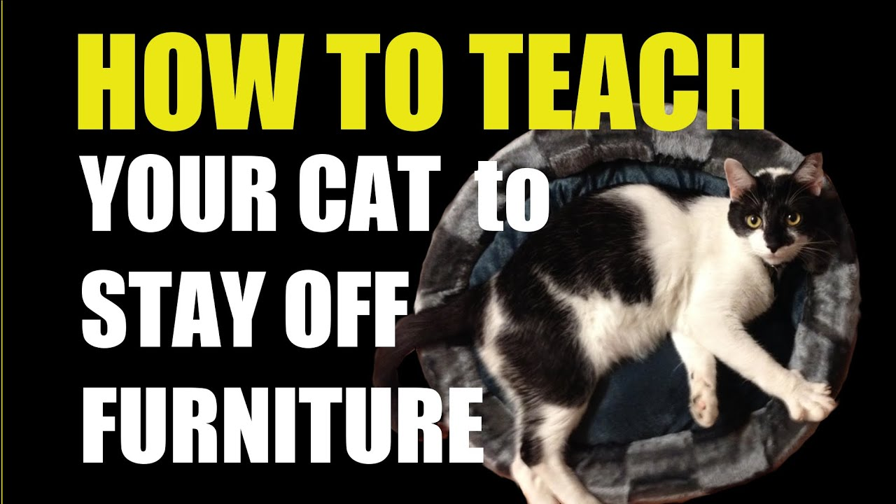 Stop Cats From Scratching Furniture How To Teach Your Cat Youtube
