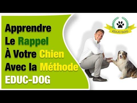 Donner Chiot - 10 techniques à savoir - Techniques de base - Guide du chien