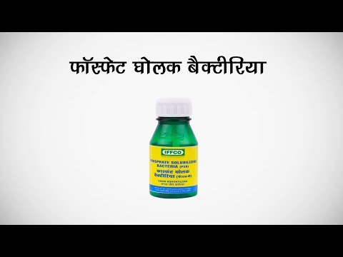 Phosphate Solubilizing Bacteria (PSB) in Hindi