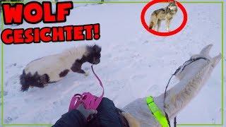 Wolf gesichtet ✮ Ausreiten mit meinem Pony, Rubineska, Escada und Jessy - im schnee ♥