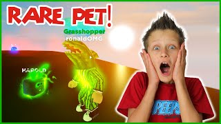 GETTING THE MOST RARE PET!