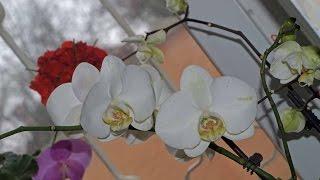 ПОЛИВ ОРХИДЕЙ в домашних условиях(Как правильно поливать орхидеи в домашних условиях рассказывает и показывает цветовод-любитель из г. Запор..., 2015-02-02T19:11:49.000Z)