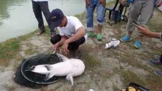 Senwell Fishing Part. Kamunting Tai...