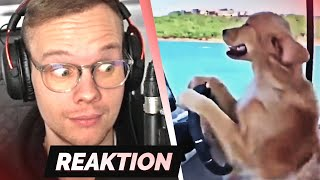 TRY NOT TO LAUGH 36.0 😎😂 | Reaktion