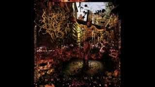Top 10 Christian Slamming Brutal Death Metal Bands (updated)