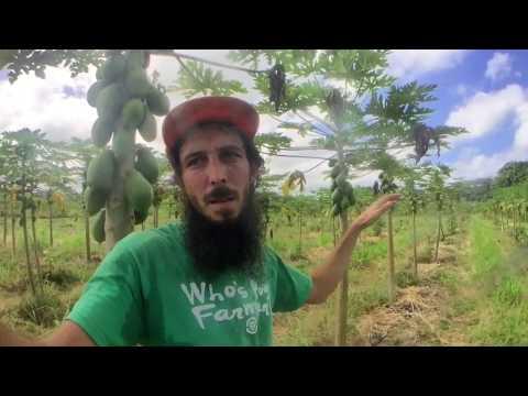 Beyond GMO: Grass Management and Inspiration
