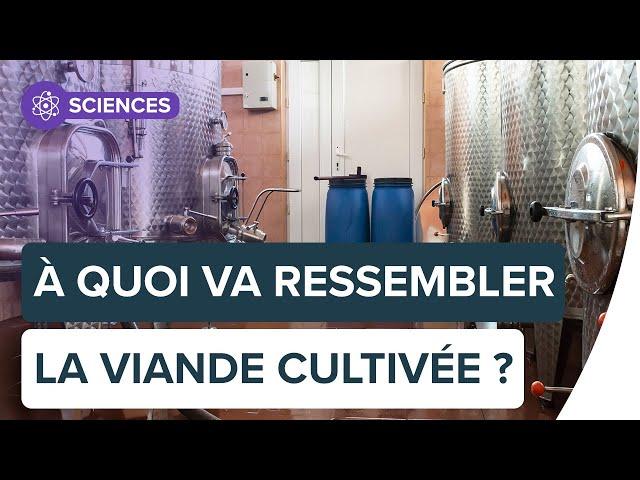 Viande cultivée en laboratoire : tour d'horizon   Futura