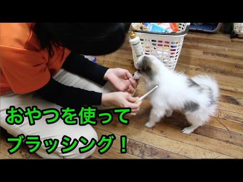 おやつを使ってブラッシング!〜犬のしつけは大阪のsmart-dog〜