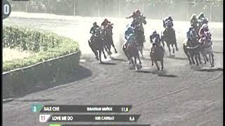 Vidéo de la course PMU DIVO RAIDER