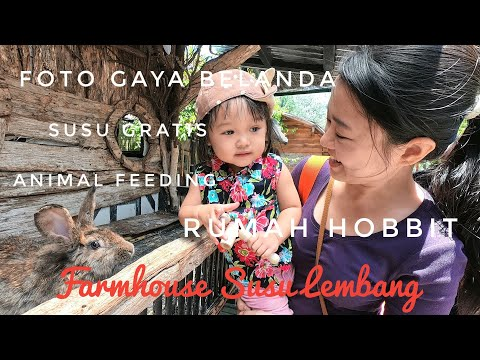 farmhouse-susu-lembang-|-rumah-hobbit-bandung-wisata-kasih-makan-hewan