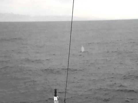 R.V. Celtic Explorer offshore Fin Whales 2012