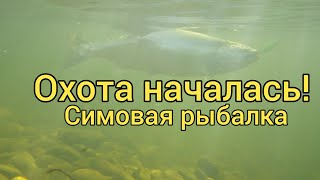 Охота началась Симовая рыбалка Вишневый лосось Сахалина Сахалинская рыбалка Sakhalin fishing