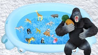 Learn Words in English - Wild Animal Names with Toys for Kids | Lum Sum Kids
