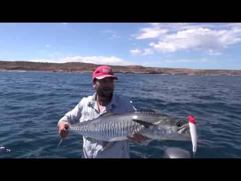 How To Catch Spanish (king) Mackerel, The Average Angler Fishing Adventures