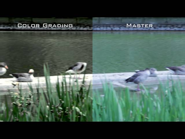 Test. Color Correction / Grading.