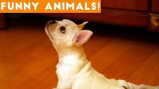 Funniest Pets of the Week Compilation January 2018 | Funny Pet Videos