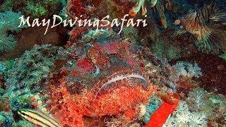 Прекрасные и опасные. Рыбы Красного моря(http://www.maydivingsafari.com/, 2014-03-23T08:13:00.000Z)