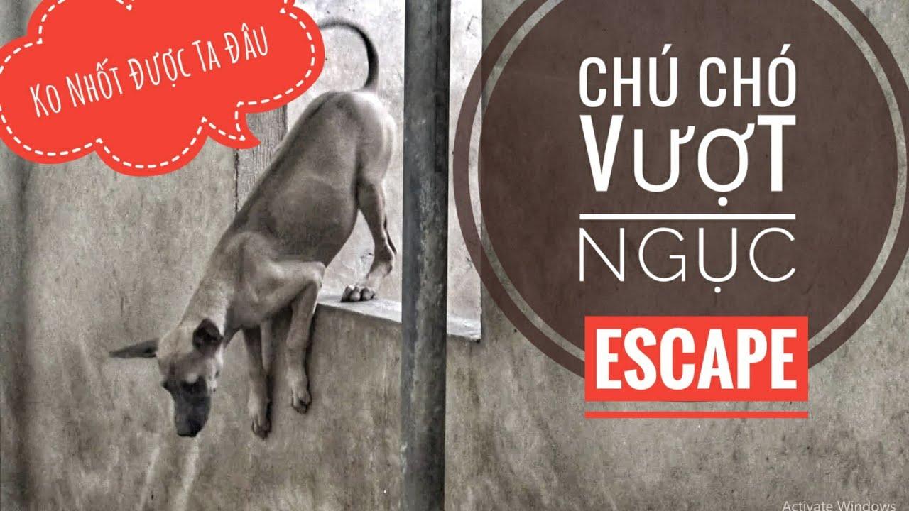 """Chú Chó """"Vượt Ngục"""" Siêu Hạng - Không Thể Nào Nhốt/ Chó Phú Quốc/ NhamTuatTV - Dog in Vietnam"""