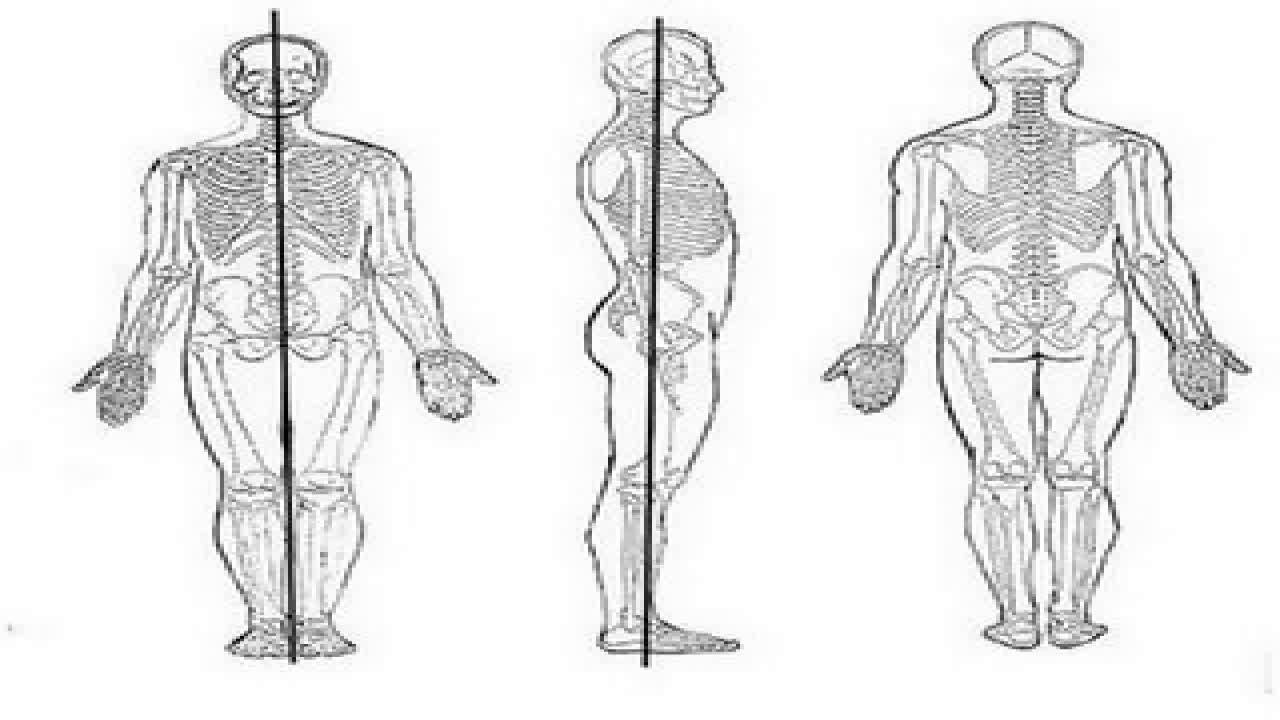 Descripción Anatómica del Movimiento del Cuerpo Humano - YouTube