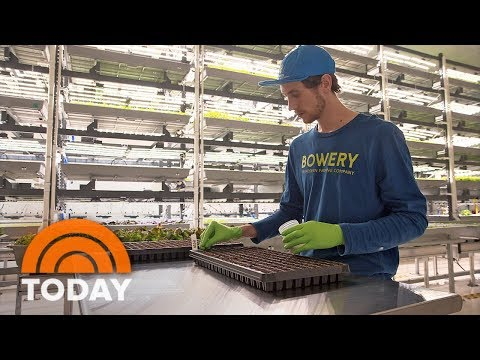 Vertical Farming Is Revolutionizing How Food Is grown In America   TODAY