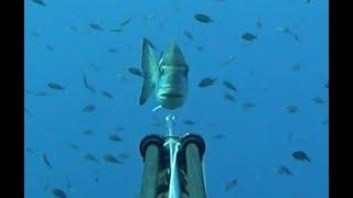 Pesca submarina. Mal, mal, muy bien, bien, bien y super bien