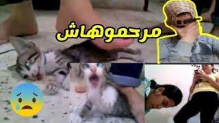 حقائق حول حادثة القطة البريئة  الدي قتلت ببشاعة و عنف من طرف فتيات يعبدون الشيطان مقيمين بماليزيا