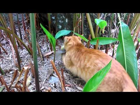 Kucing tangkap burung