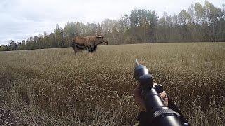 Охота #48 загонная охота, три лося