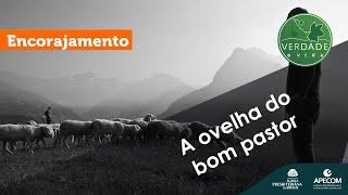 0721 - A ovelha do bom pastor