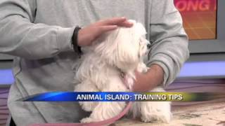 Long Island Dog Trainer | Puppy Obedience Nassau County, Ny | Michael's Pack | Doggie Playtime