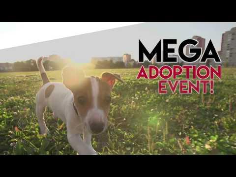 Mega Adoption Summer 2018