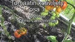 72. Tomaatin kotiviljely, Paattinen, osa 1