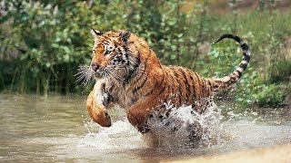 Beautiful World - Wild Animals (Petar Milinković - Ashes Of Stars) [Short Film]