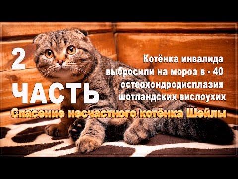 БИК 048073601 - отделение N8598 сбербанка россии