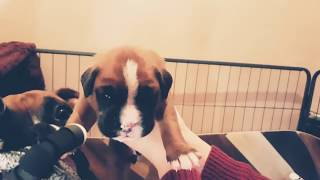 Puppies open their eyes for the first time