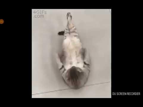 Un chat très sportif😺
