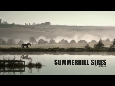 SUMMERHILL SIRES FILM 2013 / 2014