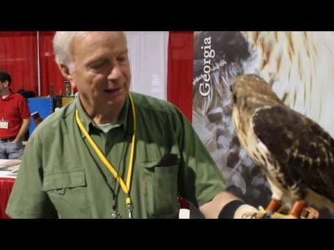 Falconer talks about his red tail hawk