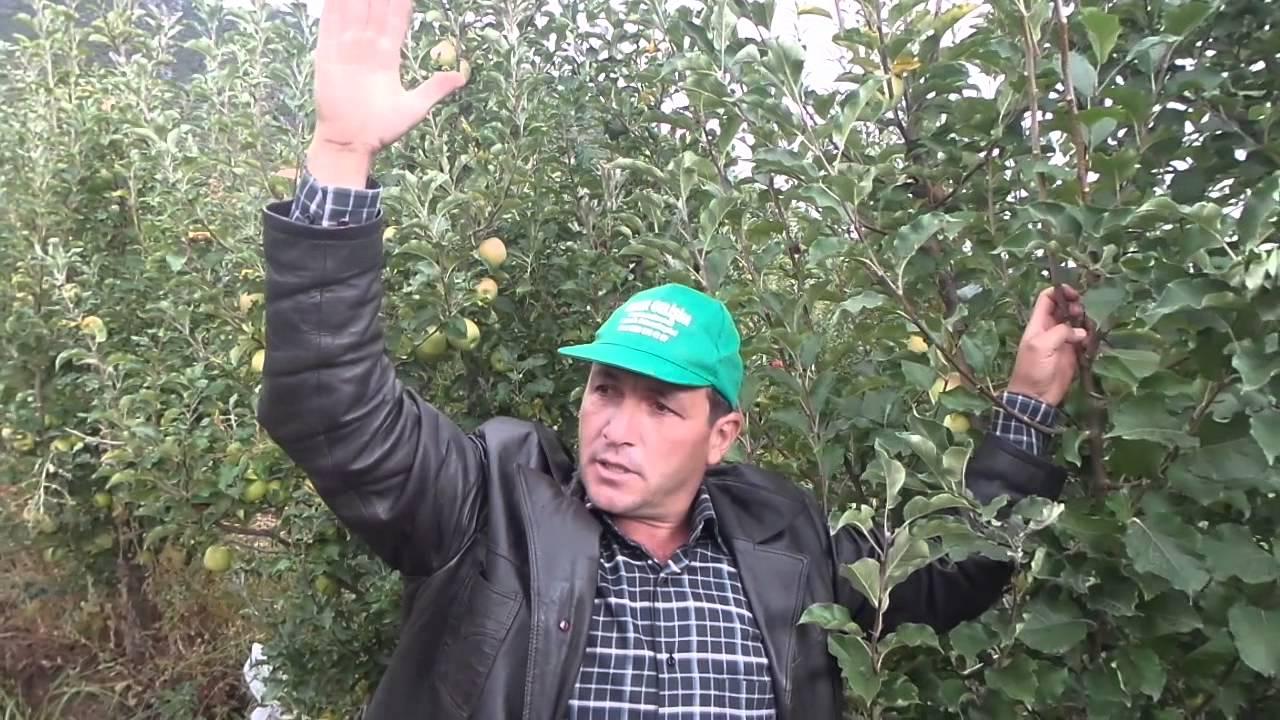 Sonbaharda elma nasıl ekilir: tavsiyeler ve yöntemler