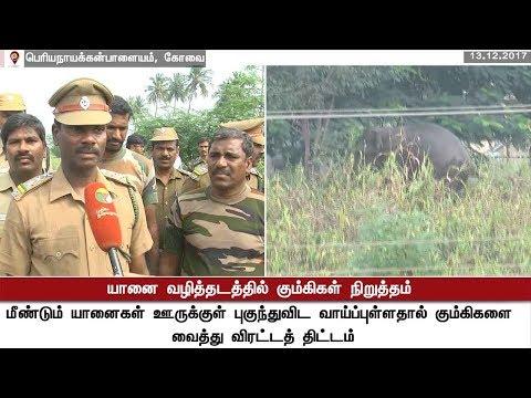 கோவை:  யானைகள் வழித்தடத்தில் கும்கிகள் நிறுத்தம் | Elephant | Coimbatore